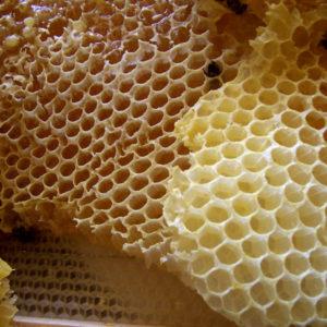 Raw Honey In Honeycomb Of Wildflowers 600g