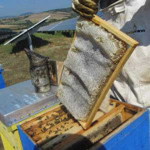 1.5kg Multiflower Pure Raw Organic Honey Unfiltered Unheated Crystallized Honey